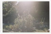 'Cliché of a Landscape'